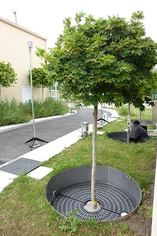 arbre de pluie - SenseCity 2020